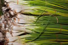 Piles of green onions Royalty Free Stock Photo