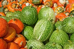 Piles of green and orange pumpkins Stock Images