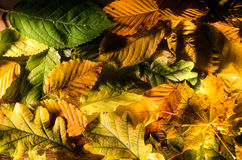 Piles of leaves. A wonderful and colorful piles of leaves Royalty Free Stock Photos
