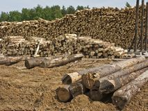 Piles of logs stock photos