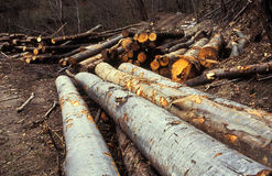 Piles of logs in forest. Piles of logs in a forest, deforestation concept. Film scan Stock Images