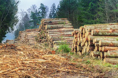 Piles of logs in the forest Royalty Free Stock Photos