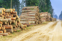 Piles of logs in the forest near road Royalty Free Stock Photography