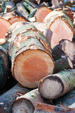 Piles of logs. Just  cut Stock Images