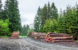 Piles Of Logs After Lumbering In Sumava Stock Photos