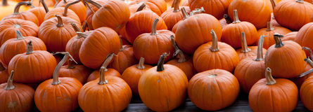 Piles Of Pumpkins Background Stock Photo