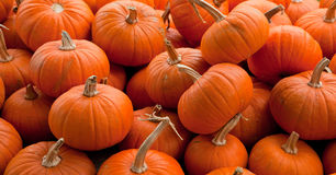 Piles of pumpkins background Royalty Free Stock Photos