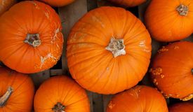 Piles of pumpkins background Royalty Free Stock Images