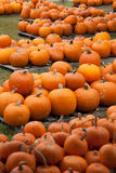 Piles of pumpkins background Stock Image