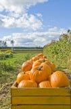 Piles of Pumpkins on a Farm Royalty Free Stock Photos