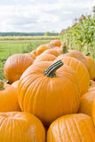 Piles of Pumpkins on a Farm Royalty Free Stock Images