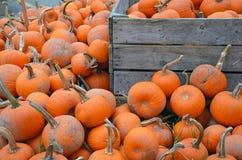 Piles of pumpkins Stock Photography