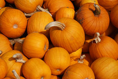 Piles of pumpkins. During harvest time Stock Image