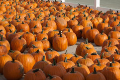 Piles of pumpkins in michigan Royalty Free Stock Photo