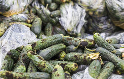Piles of rotten cucumbers on the landfill Stock Images
