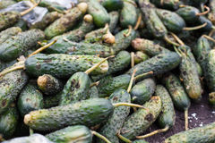 Piles of rotten cucumbers on the landfill Stock Photo