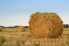 Piles sèches de foin sur le champ pendant le temps de récolte Photos libres de droits