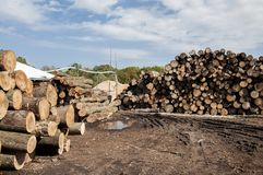 Saw logs Royalty Free Stock Photo