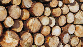 Piles of Sawn Timber Stock Photos