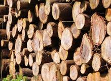Piles of Sawn Timber. Logs Stock Photo