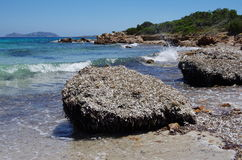 Piles of seaweeds on the beach in Sardinia. Stock Images