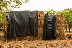 Piles of straw Stock Image