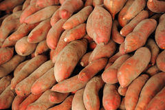 Piles of sweet potato. Sweet potato harvest in farmer market Royalty Free Stock Images