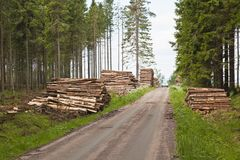 Piles of timber Royalty Free Stock Images