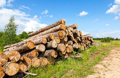 Piles of timber along the forest road Stock Photos