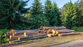Piles of timber logs, deforestration concept Stock Photos