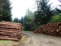 Piles of timber Stock Images
