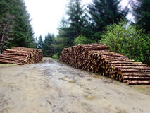 Piles of timber Royalty Free Stock Photo