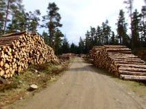 Piles of timber Stock Photo