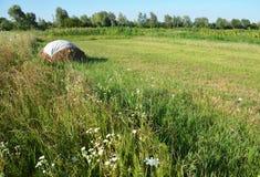 Piles traditionnelles de foin, scène rurale typique Hay Stacks dans le domaine Photographie stock libre de droits