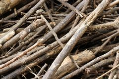 Piles of tree branches Stock Images