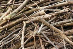 Piles of tree branches Stock Image