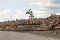 Logs at lumber mill. Stacks of trees or logs at a large lumber mill, piled to be processed into building material stock image