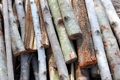 Piles of wood Stock Photography