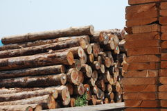 Piles of wood boards and original woods. In a factory royalty free stock image
