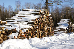 Piles of wood in forest Stock Images