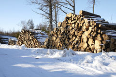 Piles of wood in forest Royalty Free Stock Photography