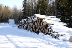 Piles of wood in forest Stock Image