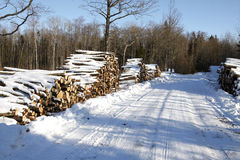 Piles of wood in forest Stock Photography