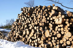 Piles of wood in forest Royalty Free Stock Photo