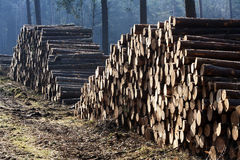 Piles of wood in a forest Stock Photos