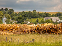 Piles of Wood Timber Trunks at a Lumber Yard in Germany Royalty Free Stock Photography