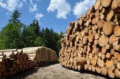 Timber harvesting. Piles of wooden logs Stock Photo