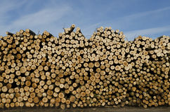 Piles of wooden logs Stock Image