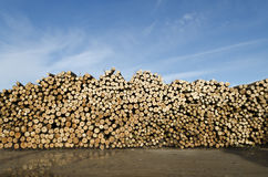 Piles of wooden logs Royalty Free Stock Image
