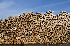 Piles of wooden logs Royalty Free Stock Photo